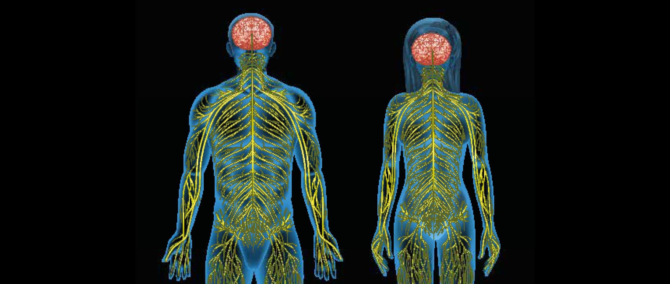 Vraagtekens bij verklaringsmodel craniale osteopathie